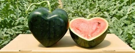 semangka love, semangka bentuk hati