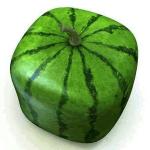 semangka kotak